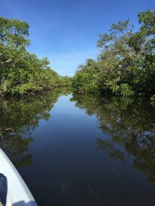"One of the miles of water ""trails"" cut through the mangrove forest of Robinson Preserve"