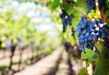 Top Ten Wineries and Bottle Shops